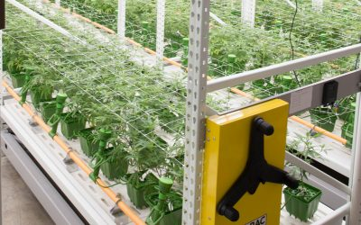 Top Cannabis Company Strainz Raises $8 Million