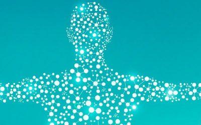 Understanding Your Endocannabinoid System